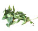Fresh Curry Leaves sorry out of stock